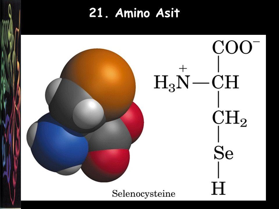 21. Amino Asit