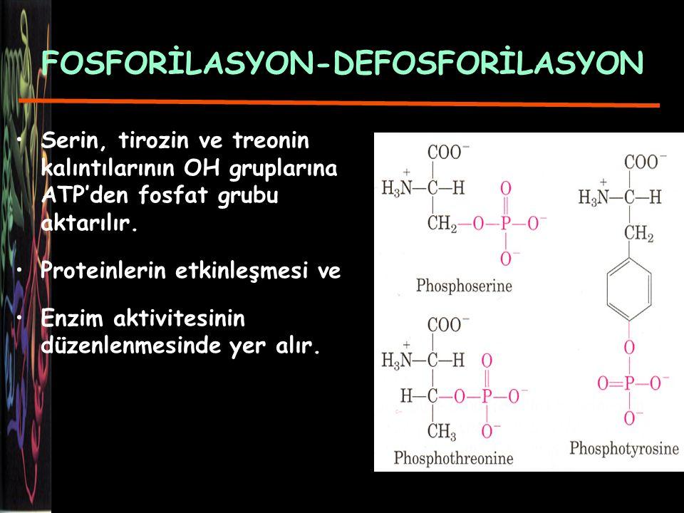 FOSFORİLASYON-DEFOSFORİLASYON