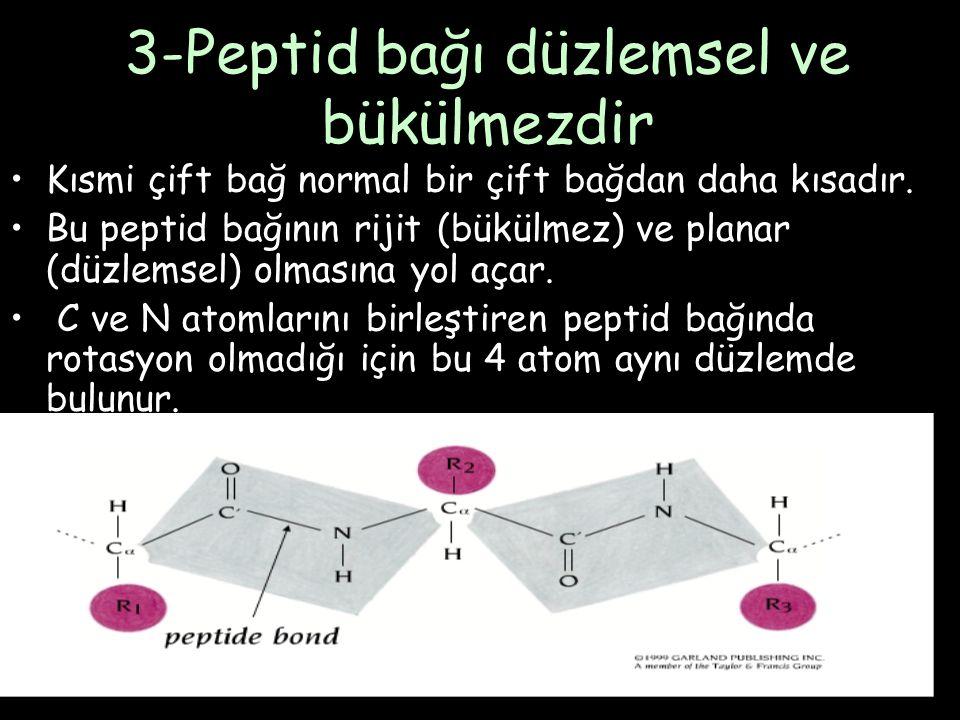 3-Peptid bağı düzlemsel ve bükülmezdir