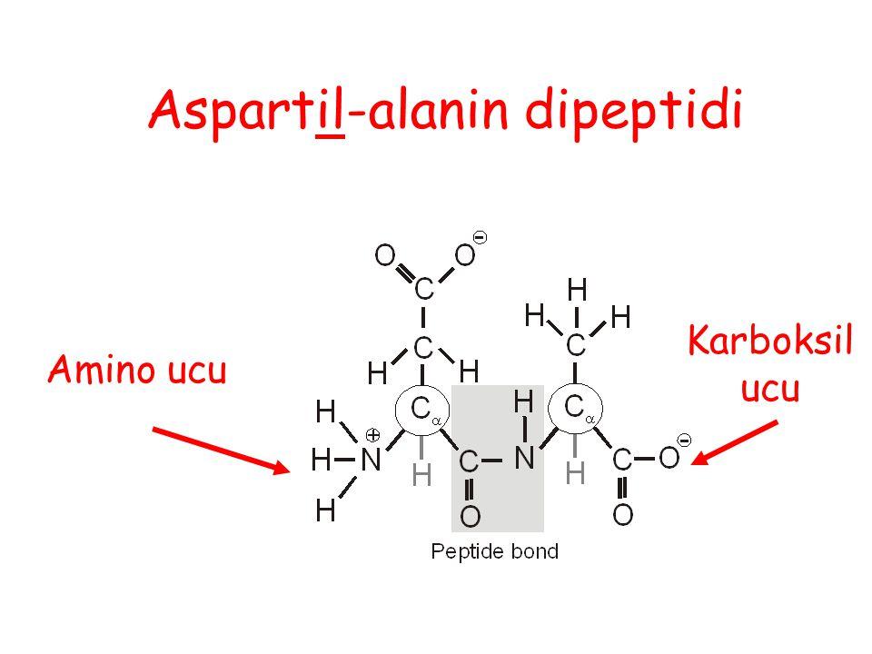 Aspartil-alanin dipeptidi
