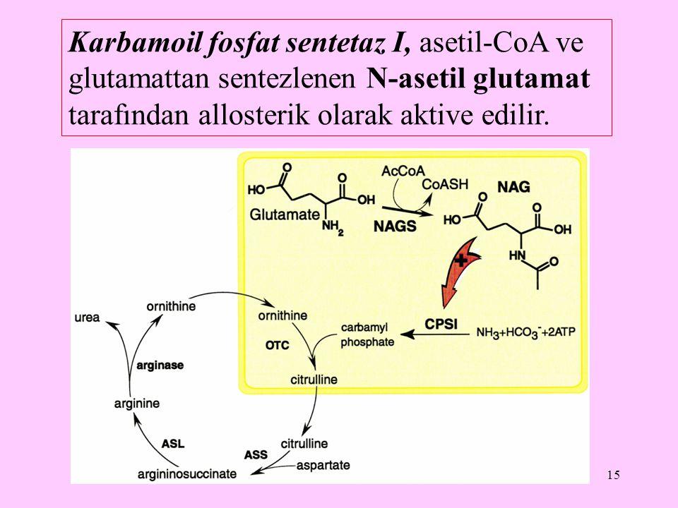 Karbamoil fosfat sentetaz I, asetil-CoA ve glutamattan sentezlenen N-asetil glutamat tarafından allosterik olarak aktive edilir.