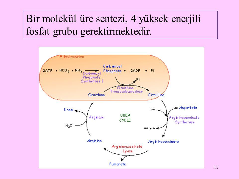 Bir molekül üre sentezi, 4 yüksek enerjili fosfat grubu gerektirmektedir.