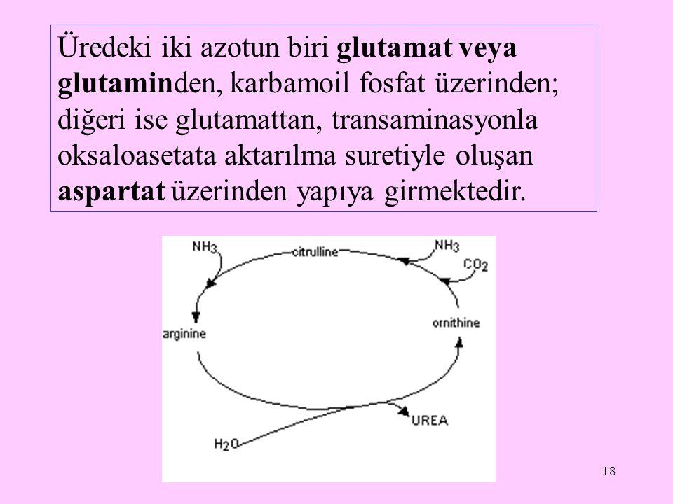 Üredeki iki azotun biri glutamat veya glutaminden, karbamoil fosfat üzerinden; diğeri ise glutamattan, transaminasyonla oksaloasetata aktarılma suretiyle oluşan aspartat üzerinden yapıya girmektedir.