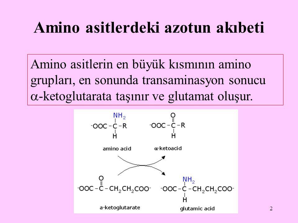 Amino asitlerdeki azotun akıbeti