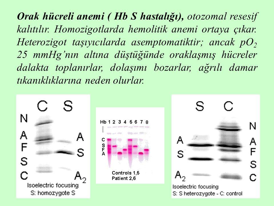 Orak hücreli anemi ( Hb S hastalığı), otozomal resesif kalıtılır