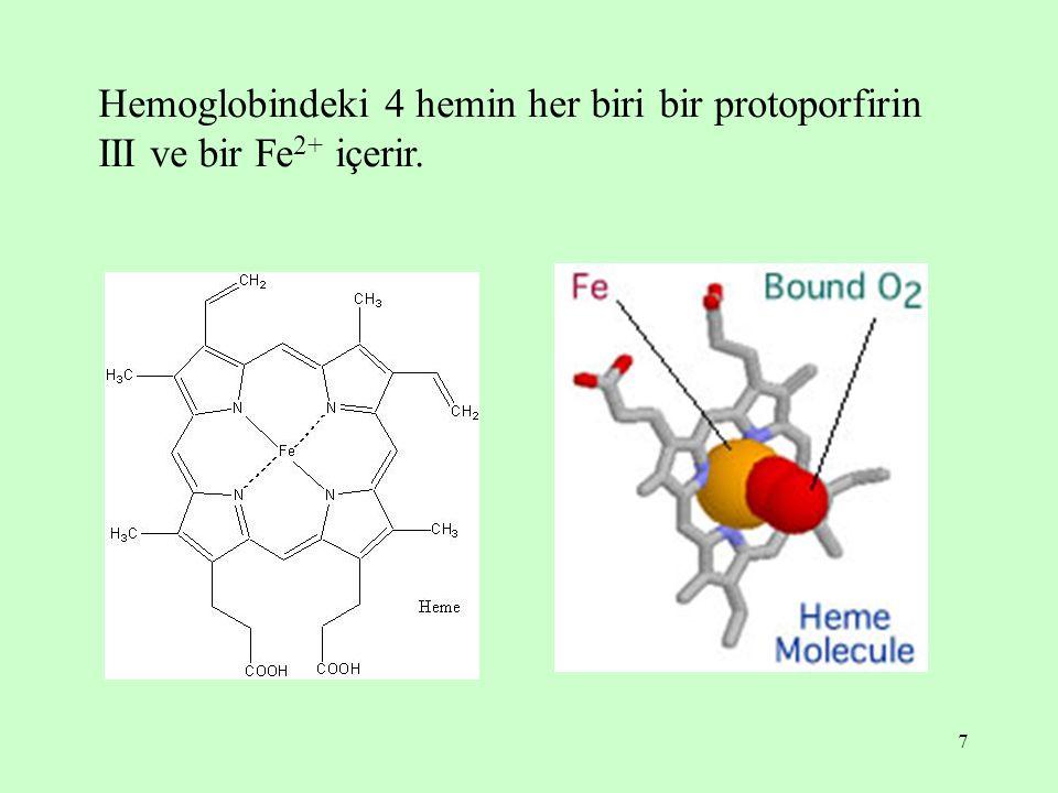 Hemoglobindeki 4 hemin her biri bir protoporfirin III ve bir Fe2+ içerir.