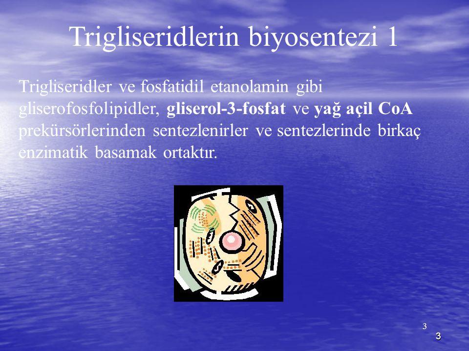 Trigliseridlerin biyosentezi 1
