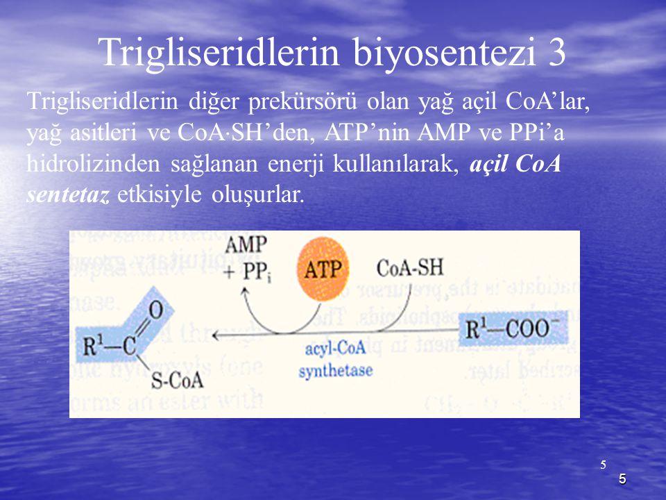 Trigliseridlerin biyosentezi 3