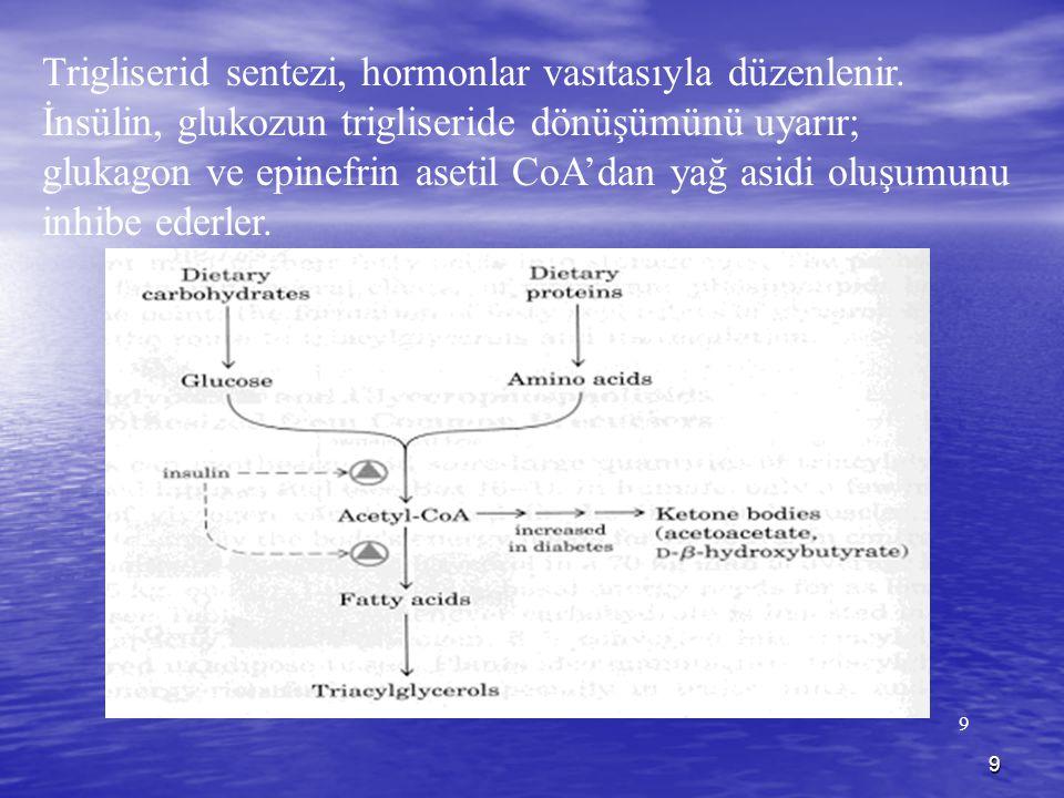 Trigliserid sentezi, hormonlar vasıtasıyla düzenlenir