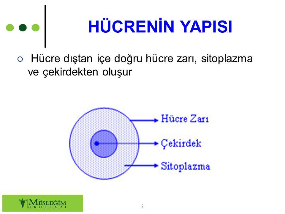 HÜCRENİN YAPISI Hücre dıştan içe doğru hücre zarı, sitoplazma ve çekirdekten oluşur