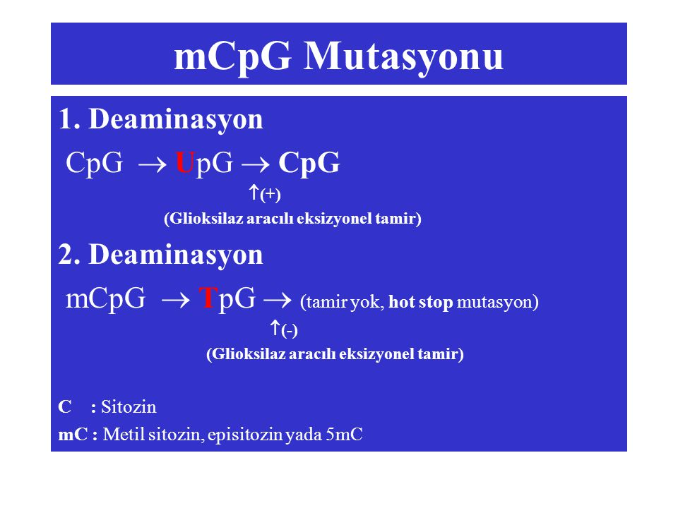 mCpG Mutasyonu 1. Deaminasyon CpG  UpG  CpG 2. Deaminasyon