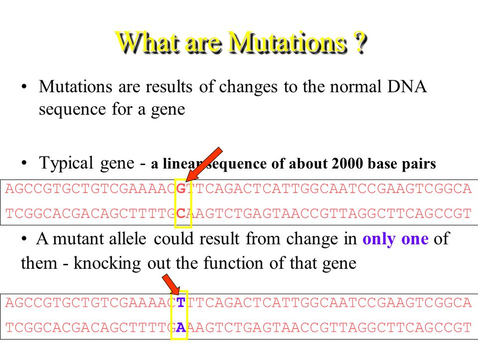 What are Mutations Mutations are results of changes to the normal DNA sequence for a gene.