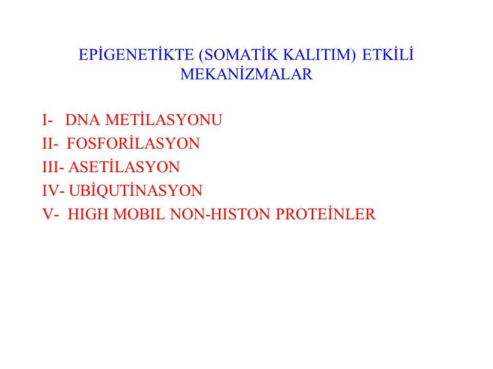 EPİGENETİKTE (SOMATİK KALITIM) ETKİLİ MEKANİZMALAR