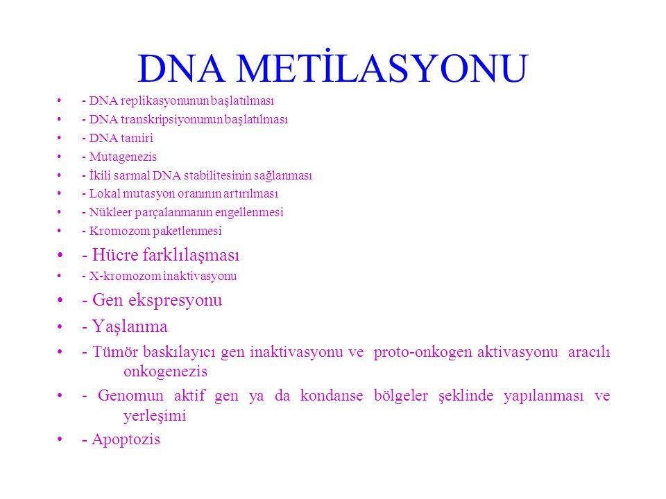 DNA METİLASYONU - Hücre farklılaşması - Gen ekspresyonu - Yaşlanma