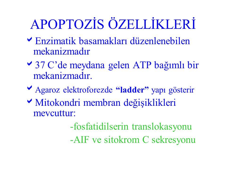APOPTOZİS ÖZELLİKLERİ