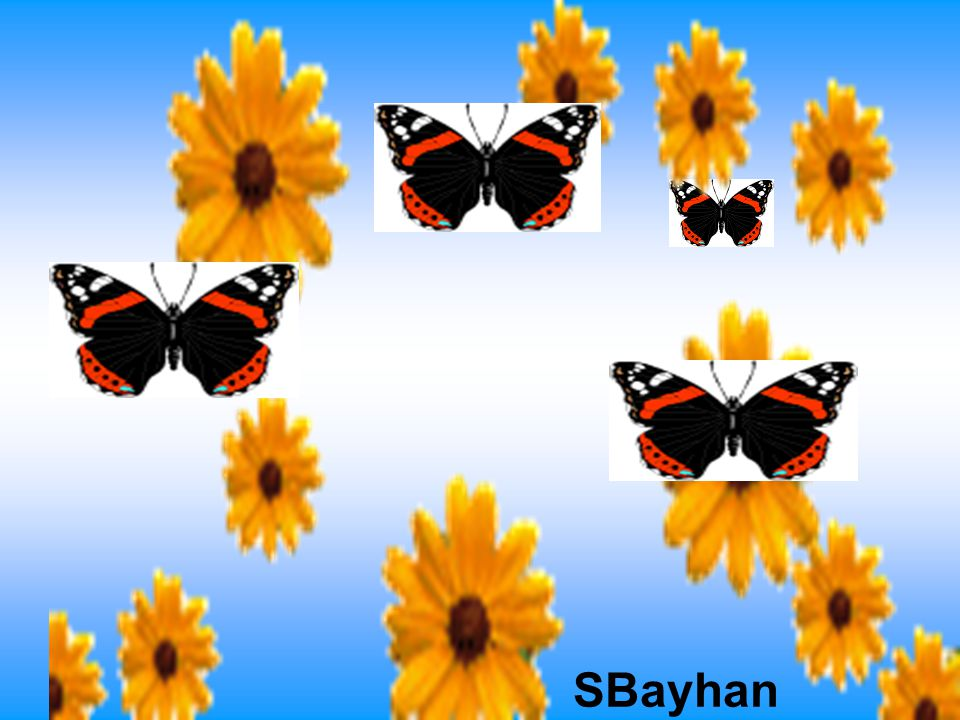 SBayhan