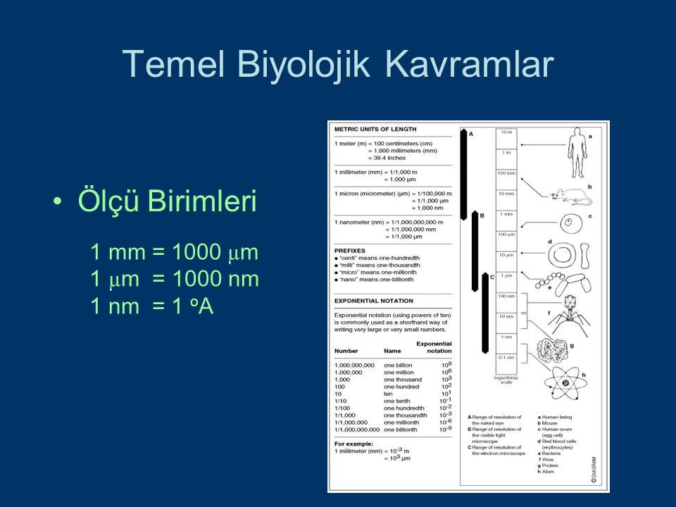 Temel Biyolojik Kavramlar