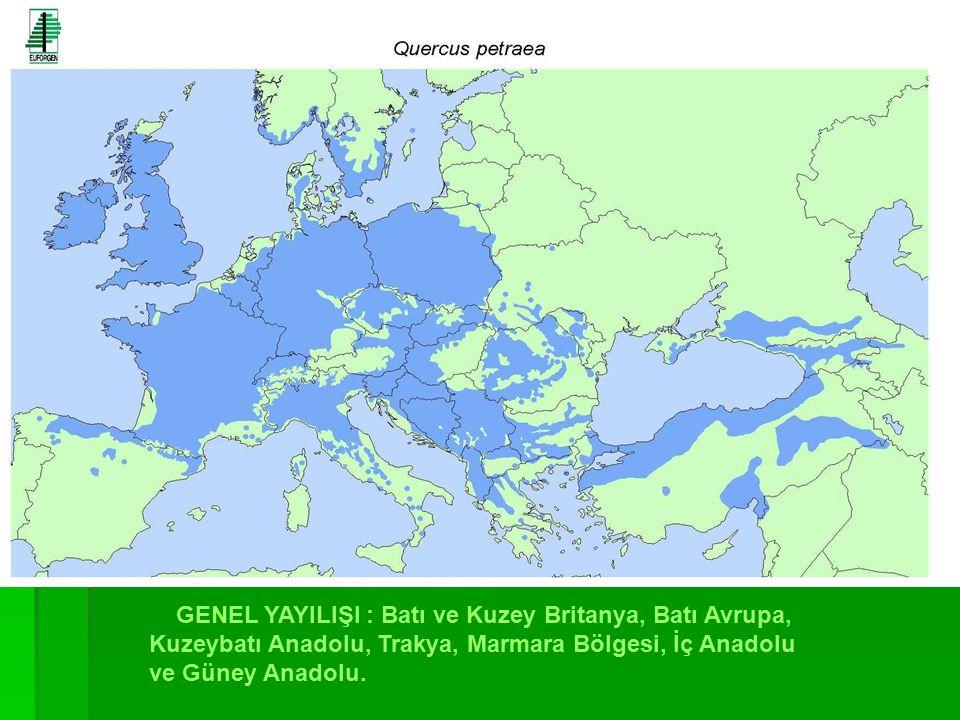GENEL YAYILIŞI : Batı ve Kuzey Britanya, Batı Avrupa, Kuzeybatı Anadolu, Trakya, Marmara Bölgesi, İç Anadolu ve Güney Anadolu.