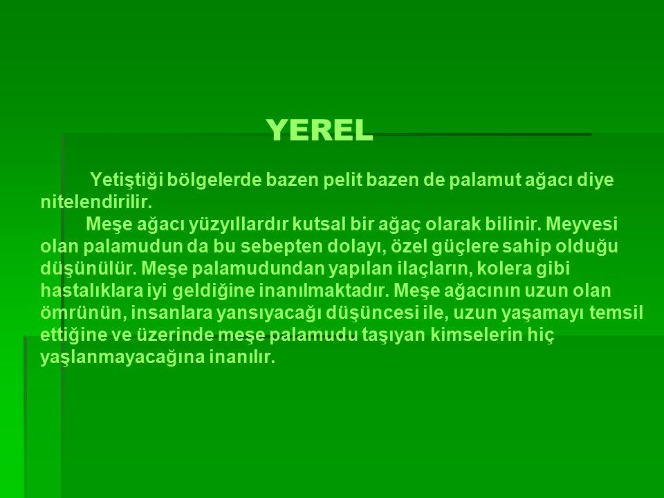 YEREL Yetiştiği bölgelerde bazen pelit bazen de palamut ağacı diye nitelendirilir.