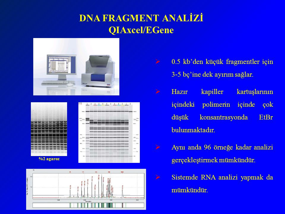 DNA FRAGMENT ANALİZİ QIAxcel/EGene