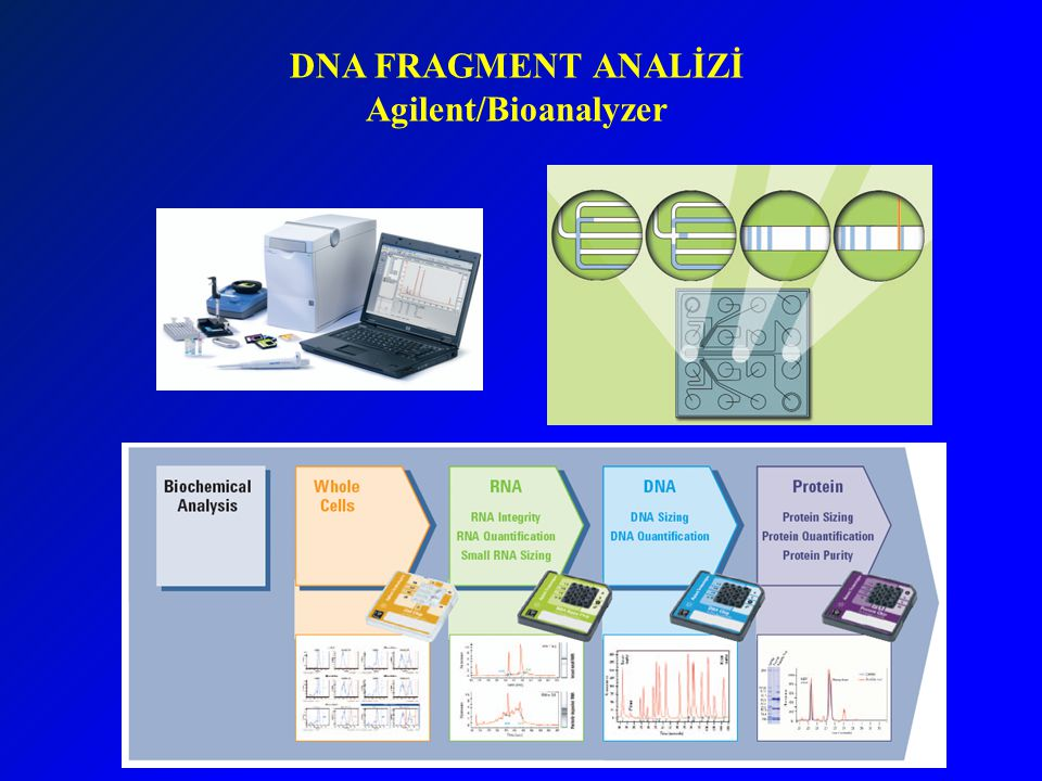DNA FRAGMENT ANALİZİ Agilent/Bioanalyzer