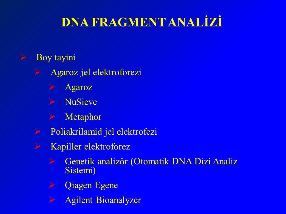 DNA FRAGMENT ANALİZİ Boy tayini Agaroz jel elektroforezi Agaroz