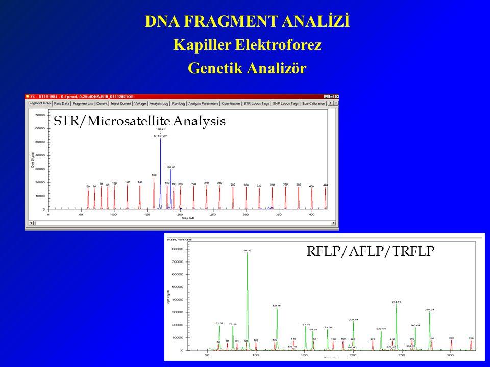 DNA FRAGMENT ANALİZİ Kapiller Elektroforez Genetik Analizör