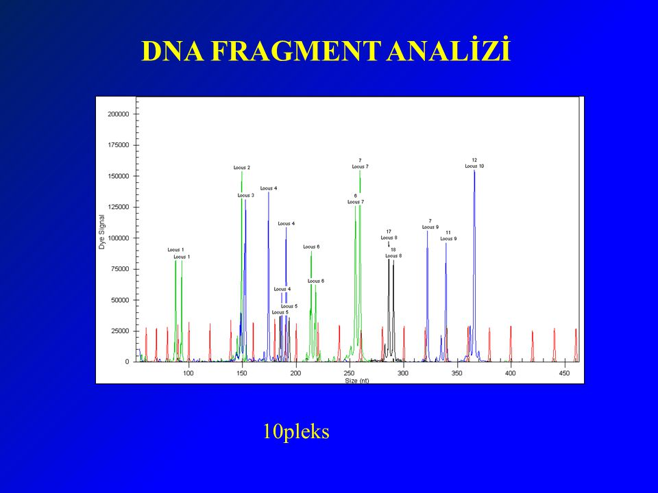 DNA FRAGMENT ANALİZİ 10pleks