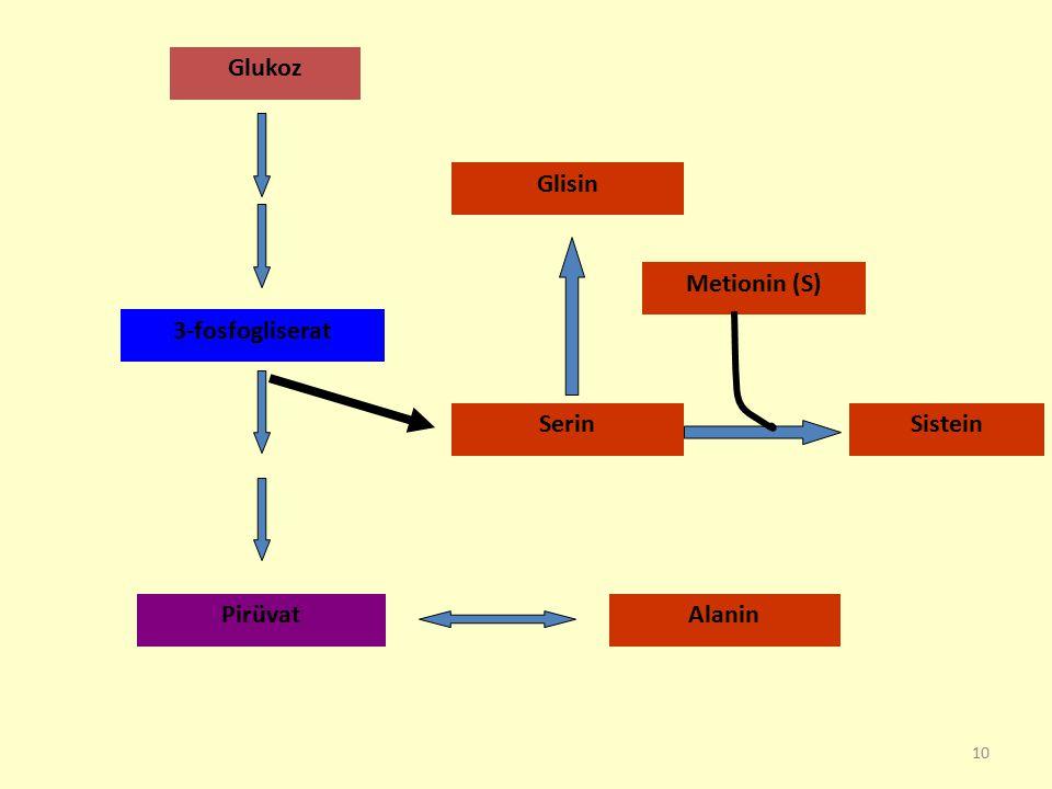Glukoz Glisin Metionin (S) 3-fosfogliserat Serin Sistein Pirüvat Alanin
