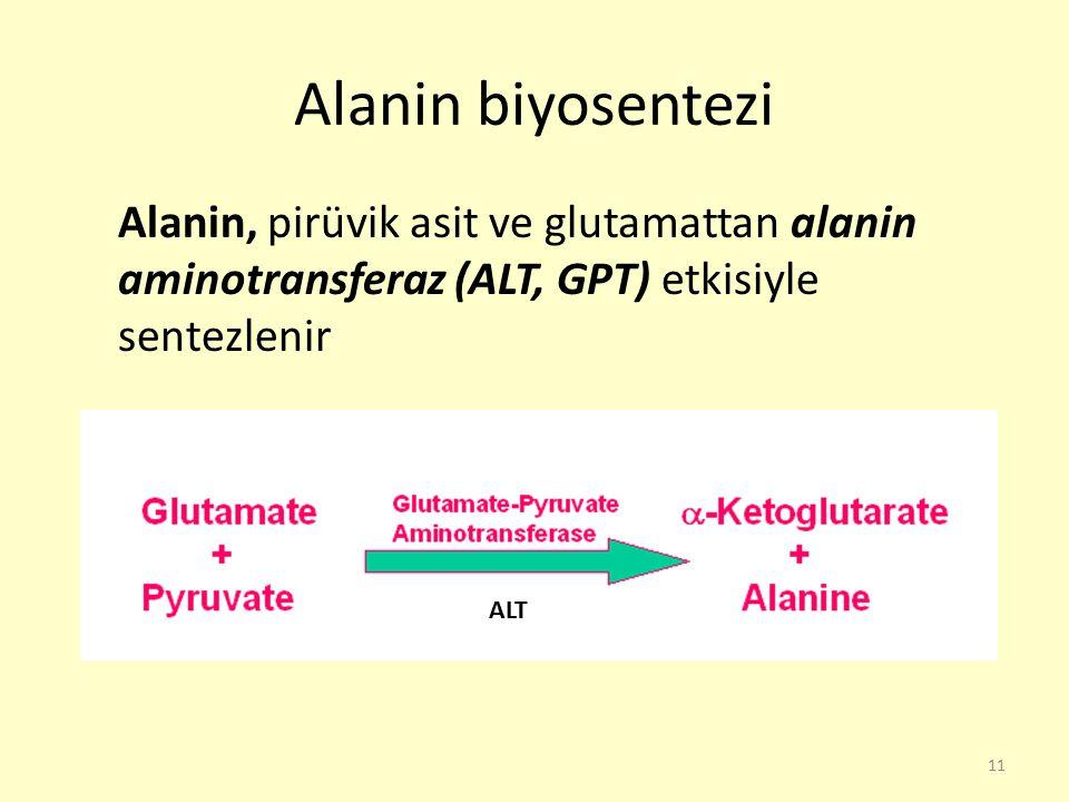 Alanin biyosentezi Alanin, pirüvik asit ve glutamattan alanin aminotransferaz (ALT, GPT) etkisiyle sentezlenir.