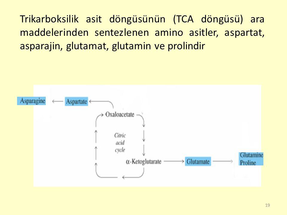 Trikarboksilik asit döngüsünün (TCA döngüsü) ara maddelerinden sentezlenen amino asitler, aspartat, asparajin, glutamat, glutamin ve prolindir