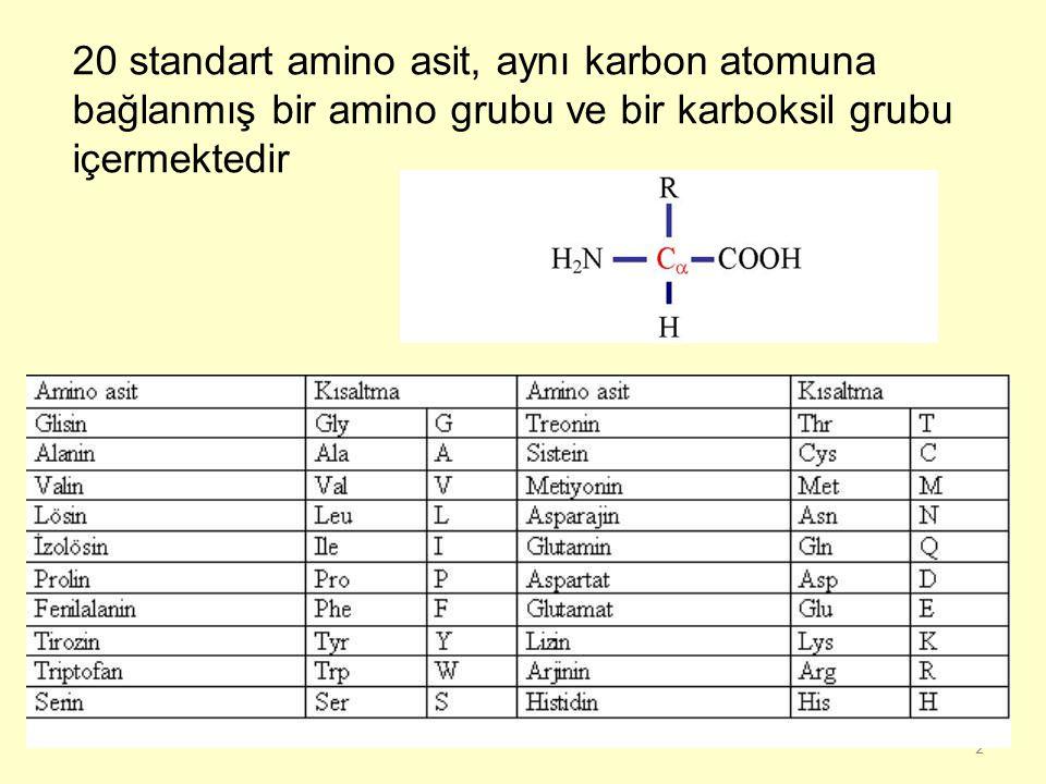 20 standart amino asit, aynı karbon atomuna bağlanmış bir amino grubu ve bir karboksil grubu içermektedir