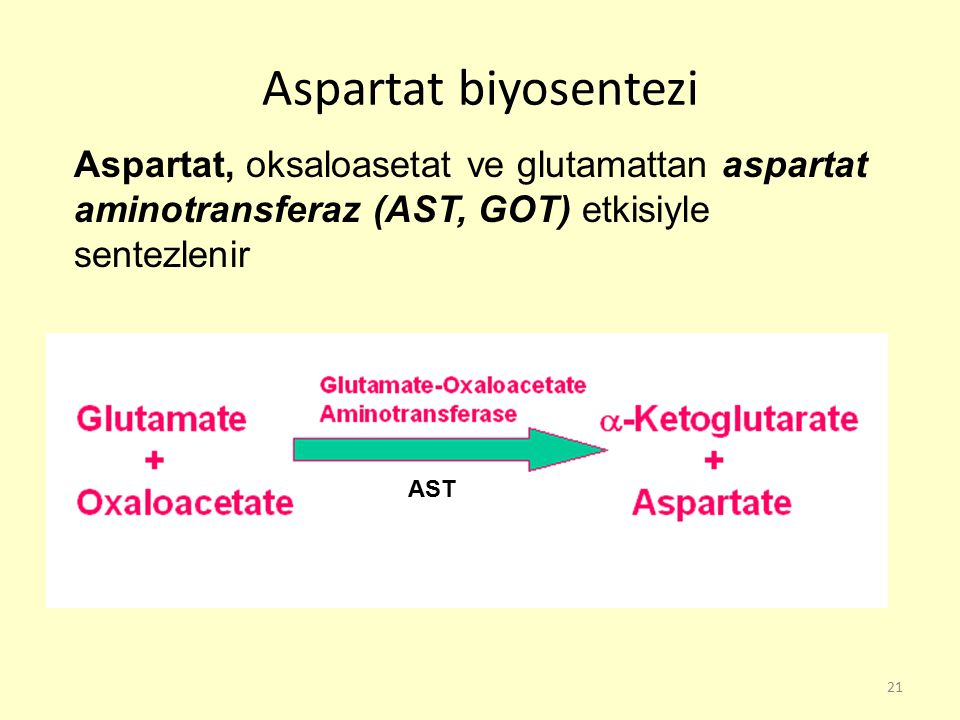 Aspartat biyosentezi Aspartat, oksaloasetat ve glutamattan aspartat aminotransferaz (AST, GOT) etkisiyle sentezlenir.