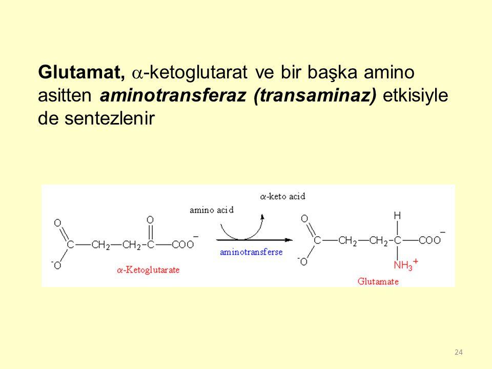 Glutamat, -ketoglutarat ve bir başka amino asitten aminotransferaz (transaminaz) etkisiyle de sentezlenir