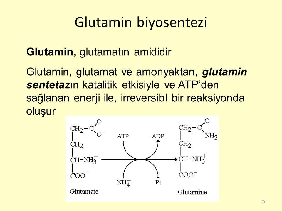 Glutamin biyosentezi Glutamin, glutamatın amididir