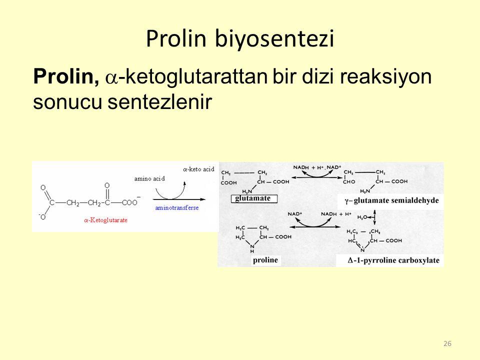 Prolin biyosentezi Prolin, -ketoglutarattan bir dizi reaksiyon sonucu sentezlenir