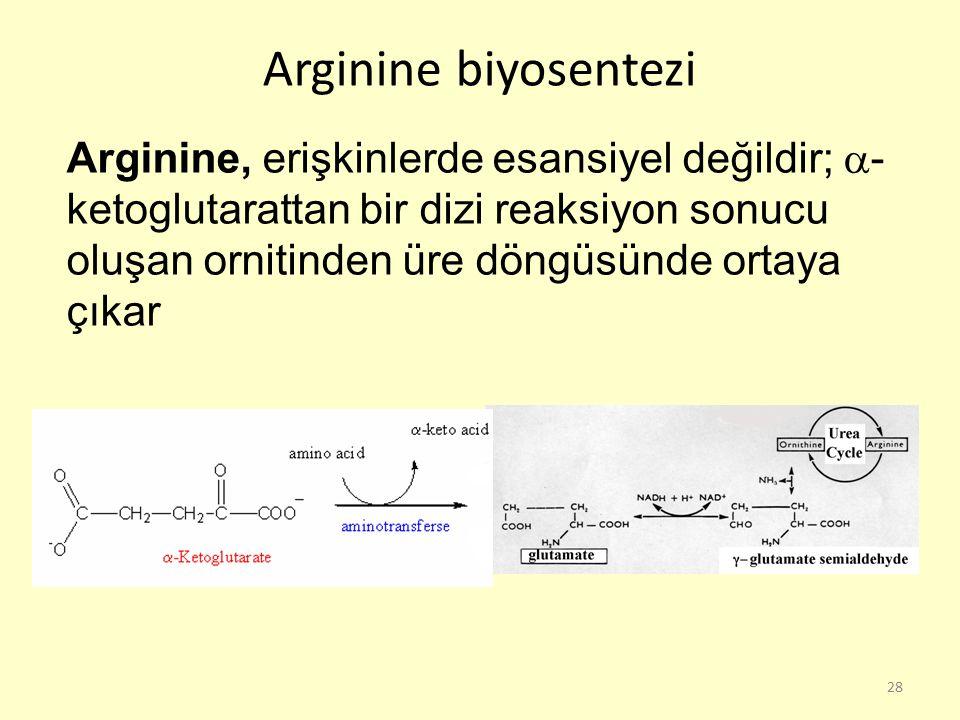 Arginine biyosentezi