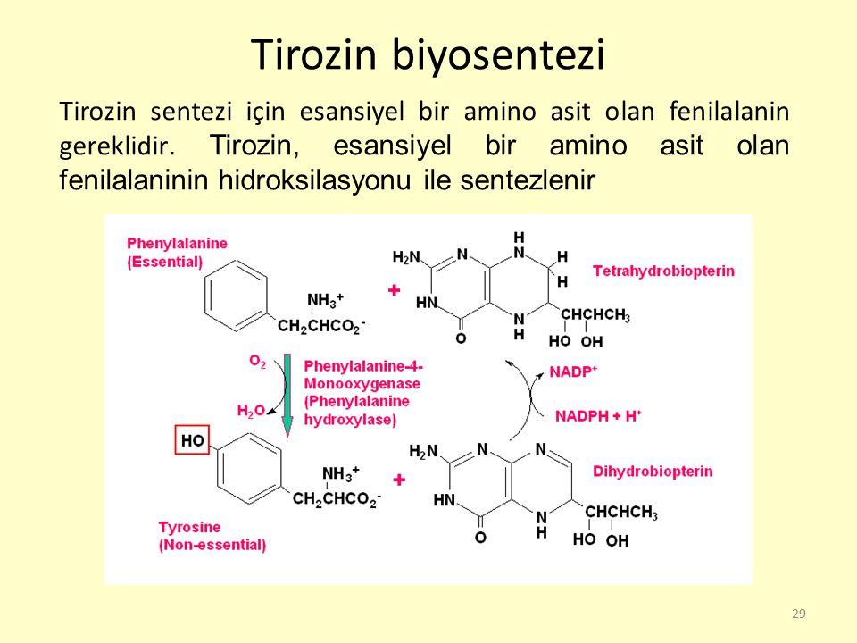 Tirozin biyosentezi