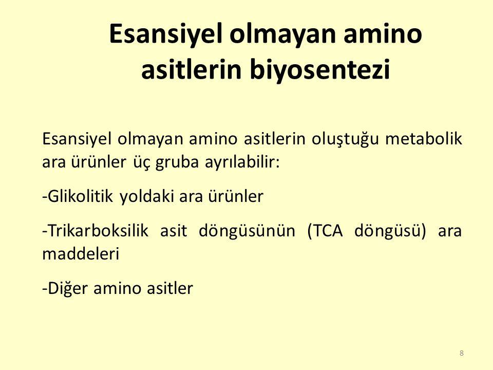 Esansiyel olmayan amino asitlerin biyosentezi
