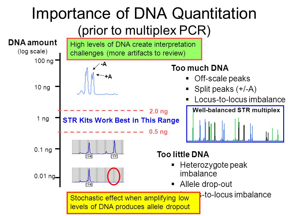 Importance of DNA Quantitation (prior to multiplex PCR)