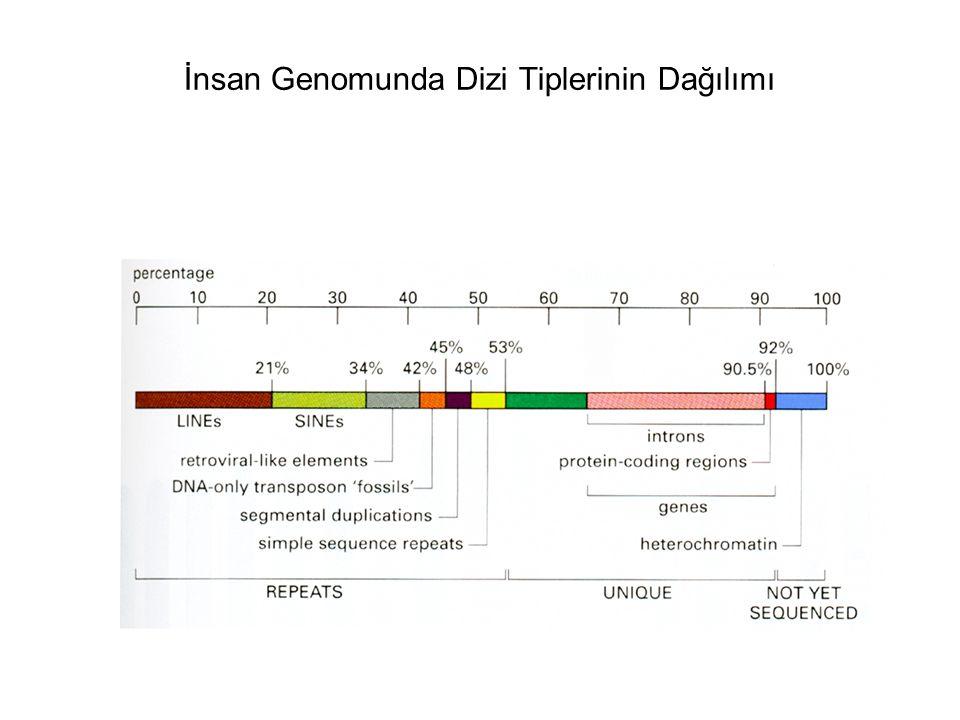 İnsan Genomunda Dizi Tiplerinin Dağılımı