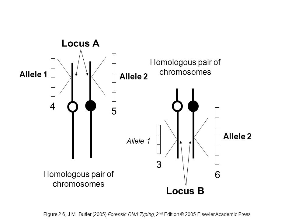 Homologous pair of chromosomes