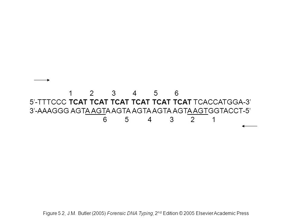 5'-TTTCCC TCAT TCAT TCAT TCAT TCAT TCAT TCACCATGGA-3'