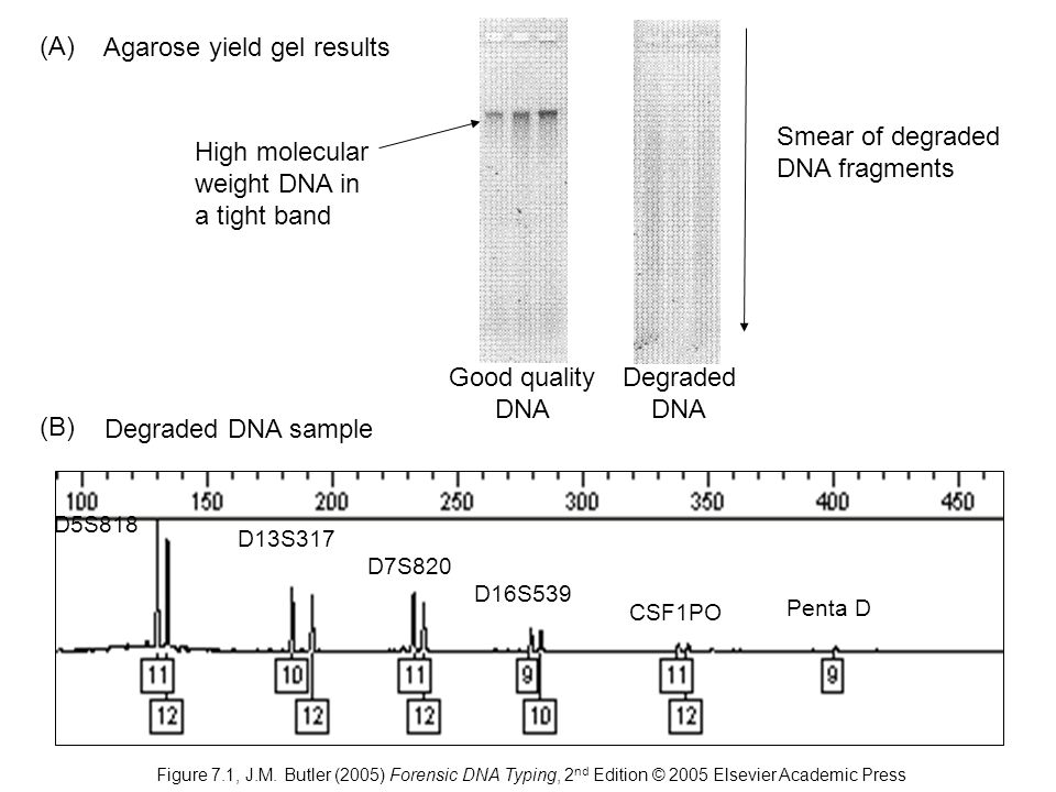 Agarose yield gel results