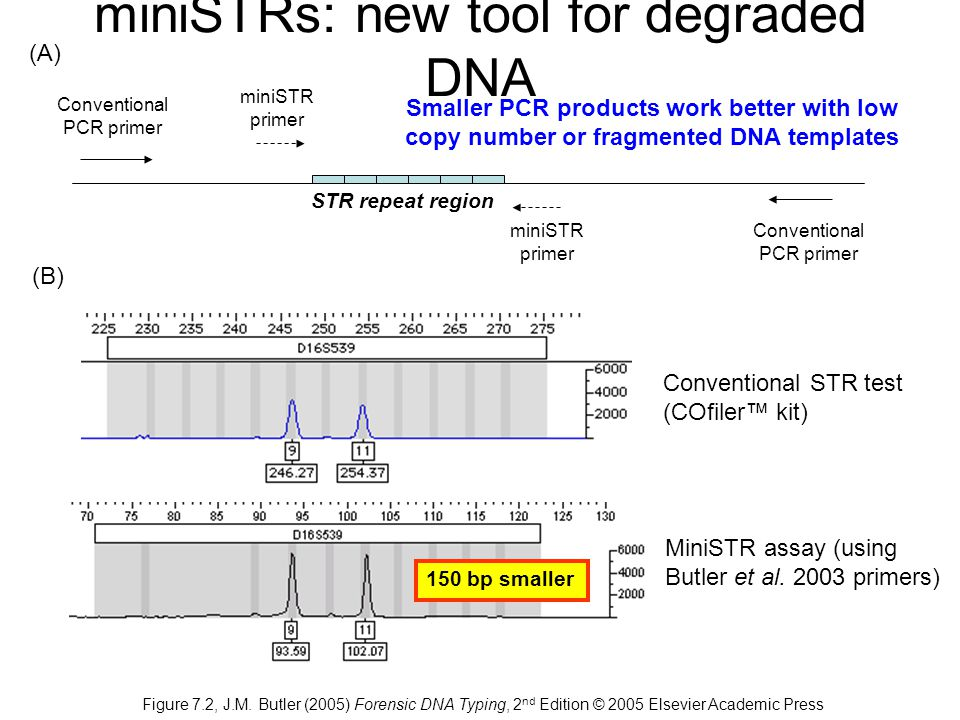 miniSTRs: new tool for degraded DNA