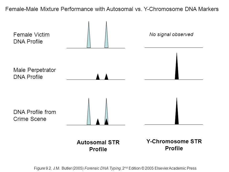 Y-Chromosome STR Profile