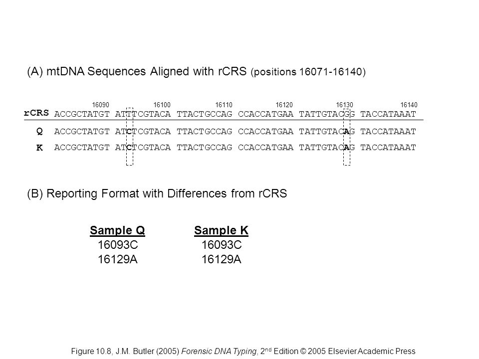 (A) mtDNA Sequences Aligned with rCRS (positions 16071-16140)