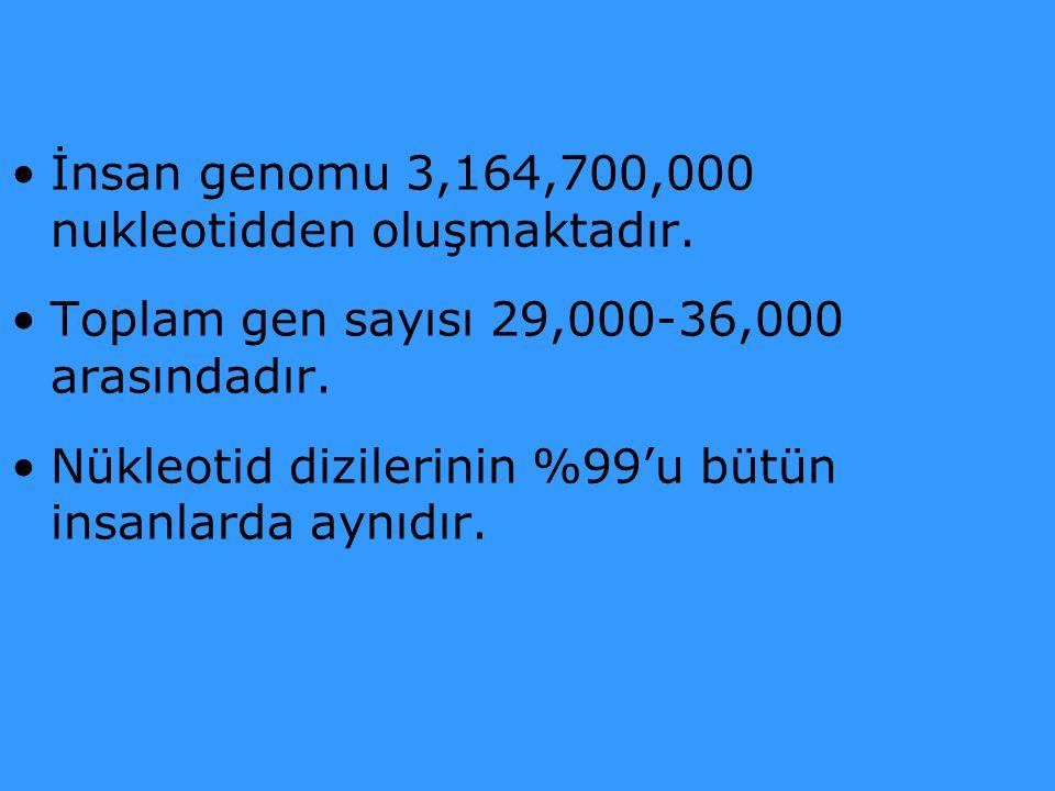 İnsan genomu 3,164,700,000 nukleotidden oluşmaktadır.