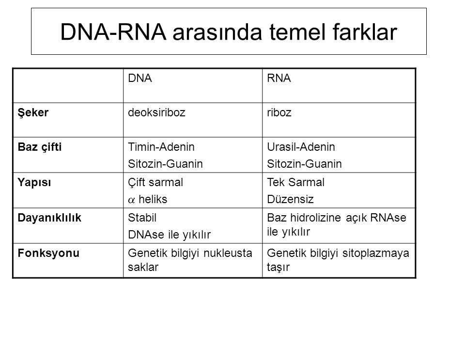 DNA-RNA arasında temel farklar