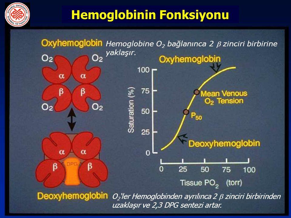 Hemoglobinin Fonksiyonu